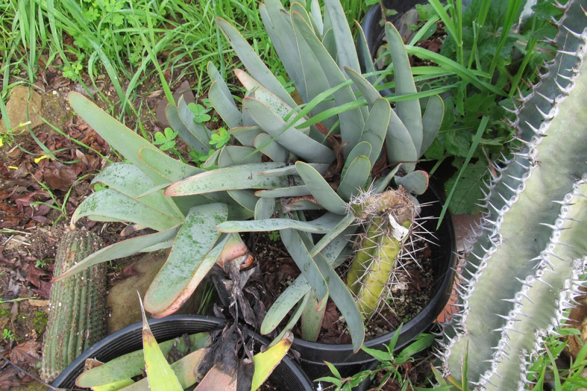 Valuable Stolen Rare Plants Returned To Local Nurseries