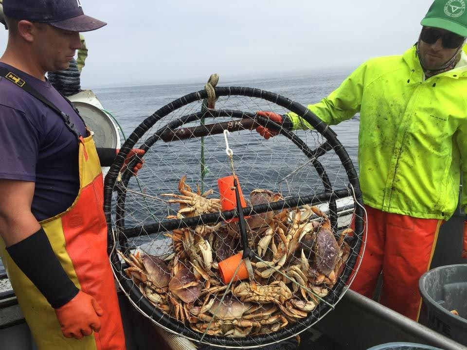 At left, Scott Blue, Bill Blue's son, and Tom Mowry, right, haul in a catch of Dungeness crabs.