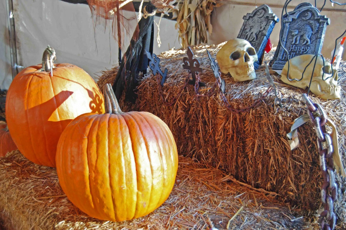 lots of chances for scary good halloween fun in santa barbara county