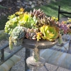 Succulents Can Give Your Decorating a Natural Flair