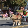 Solvang Celebrates Together for Julefest Parade