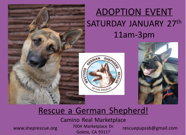 Westside German Shepherd Rescue Adoption Event