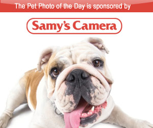 Samy's Camera. Noozhawk Photo of the day sponsor