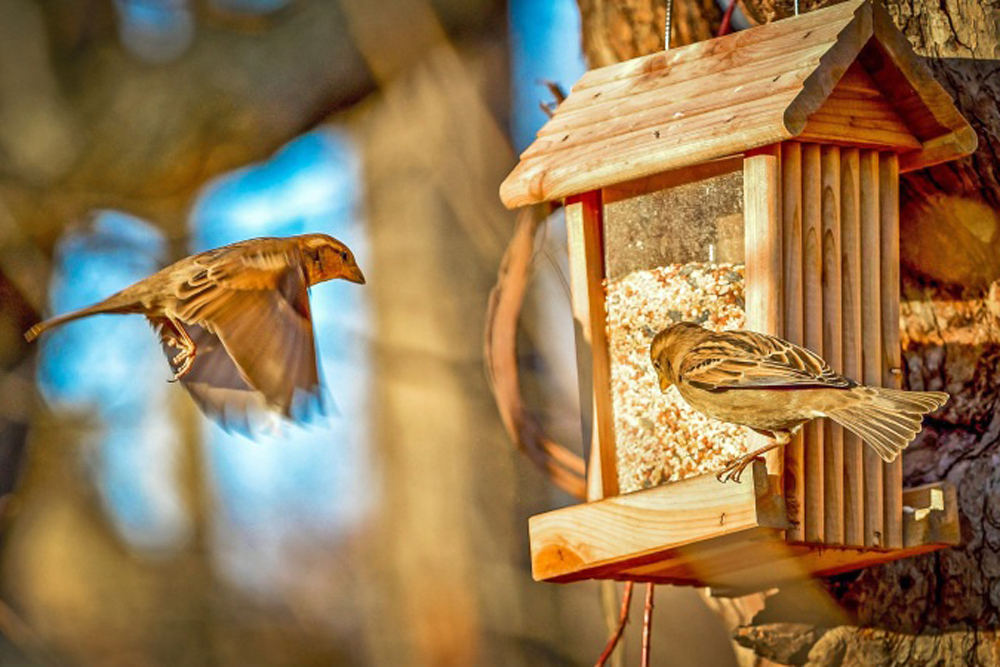 Wild bird feeders may lure a lot more unintended wildlife visitors than expected.