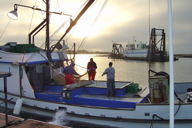 A bait hauler delivers live bait (often anchovies) to bait receiver in Santa Barbara Harbor.