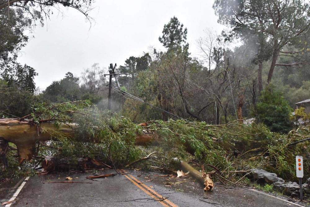 Sycamore Canyon Road in Montecito was blocked by a downed tree and utility lines Sunday, prompting a road closure in the area west of Cold Spring School.