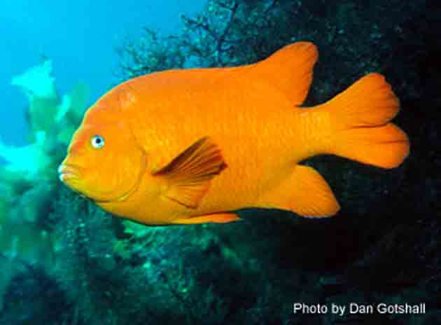 Outdoors q a what to do when prohibited species are for California saltwater fish species