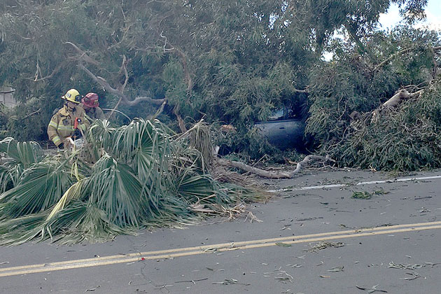 A tree comes down on a car on Milpas Street Sunday.