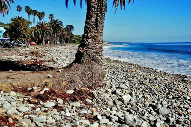 Years of erosion played havoc with the stately palms that line the shoreline at Refugio State Beach. Several succumbed to the ocean's onslaught in January.