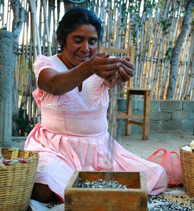 <p>Oaxacan farmer Delfina Castellanos winnows black maize, a farmer variety she and her family grow.</p>