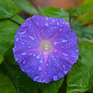 Local plants and flowers got a much needed soaking saturday from a