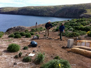 Volunteers are at the heart of conservation efforts on Santa Cruz Island.