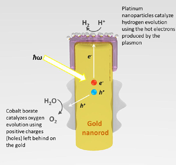 The process by which light is captured by the gold nanorod and converted into energy that can spilt water (H2O) into hydrogen and oxygen. (Syed Mubeen graphic)