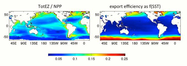 <p>Global mean determinations of the efficiency of the biological pump from, left, the present food-web model and, right, an empirical method that models export efficiency as a function of the sea surface temperature (SST).</p>
