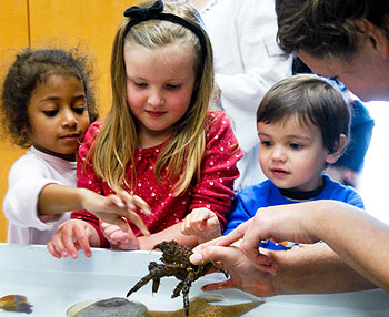 From left, Chloe Joyles, 4; Madison Sparre, 5; and Gavin Sparre, 3, check out a decorator crab held by Michelle Stamme of UCSB's Marine Sciences program. The tidepool set up by UCSB was just one of 37 exhibits at Hollister School's Science Night.