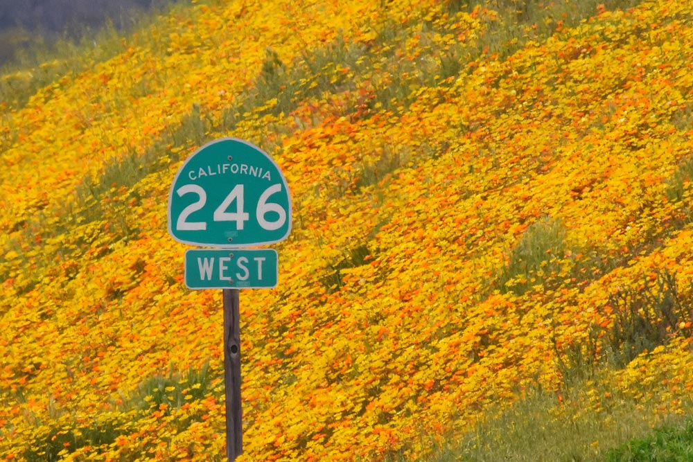 Where to Find Wildflowers in Santa Barbara County as 'Super