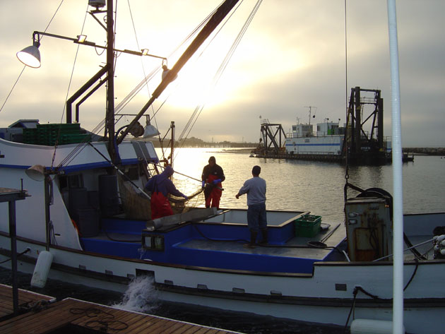 Bait haulers bring live bait to the Santa Barbara Harbor after working long, cold nights.