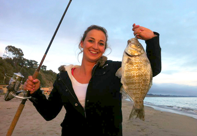 <p>Barred surfperch give birth to live young from March through July. As few as four to as many as 113 young have been counted per female, but the average is 33. Each fry measures about 2.5 inches long at birth.</p>