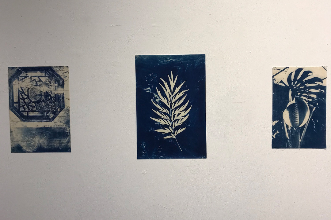 Cyanotypes by Jeff Nelson are displayed during UCSB's Arts Walk as part of an exhibit of senior artwork by Honors students in the Department of Art Wednesday.