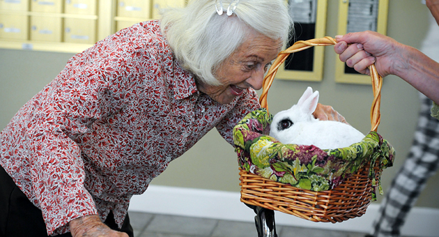 <p>Heritage House resident Verna Herziger pets Axel Rose, a therapy bunny for Visting Nurse &amp; Hospice Care.</p>
