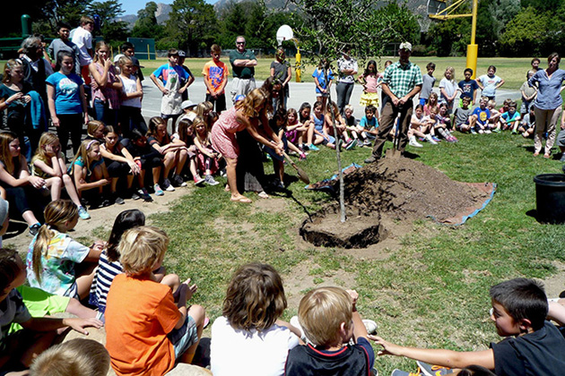 Cold Spring School students help plant a coast live oak tree during a dedication ceremony Thursday in honor of Arbor Day.