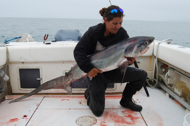 Capt. Tiffany Vague, manager at Hook, Line & Sinker fishing center in Santa Barbara, with a 90-pound, good-eating size thresher shark caught near Carpinteria.