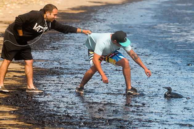 Derek Fisher holds onto the shirt of Steven Botello as he tries to reach out to help and oil soaked bird that washed ashore on Tuesday at Refugio Beach Campground. A large oil spill coated the beach and surrounding coastline.
