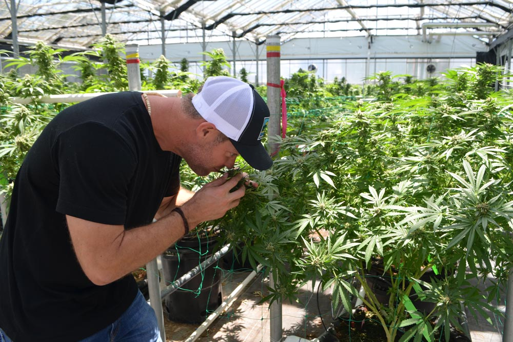 County Planning Commission to Hear Cannabis Cultivation ...