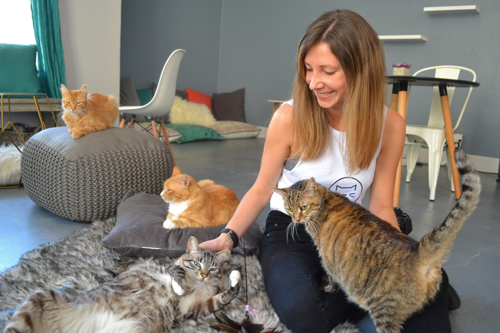 Cat Therapy owner Catalina Esteves partnered with local animal shelters for the café, which opens Monday at 1213 State St., Suite L, in Santa Barbara.