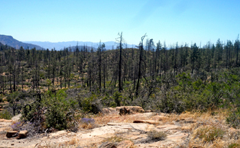 Fire damage is evident among the dead trees near Mission Pine Basin Camp.
