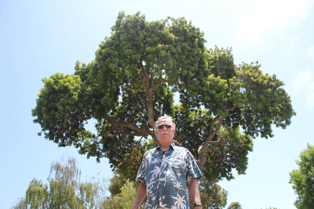 Santa Barbara resident Carey Ludford is learning that a Brazilian pepper tree isn't the only thing that needs rooting out. (Joshua Molina / Noozhawk photo)