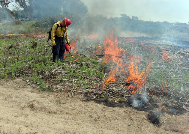 A firefighter tends to a prescribed burn on UCSB's Lagoon Island in 2011. (UCSB photo)