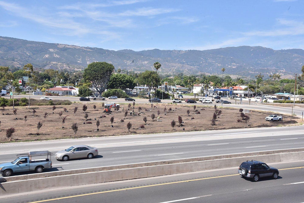 Tree-planting project along Highway 101.