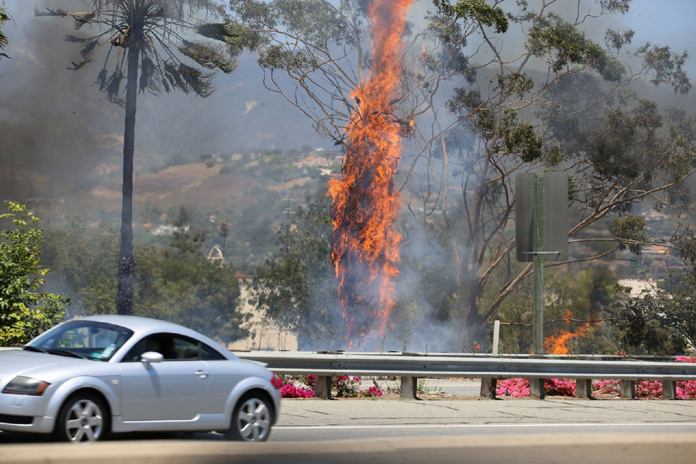 A fire that may have started in a homeless camp along Highway 101 charred three palm trees Thursday afternoon in Santa Barbara.