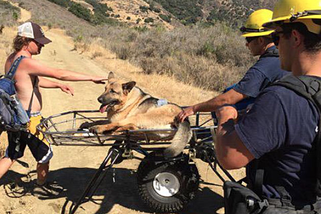 Luna, a 105-pound German shepherd who became severely dehydrated Sunday while on a hike in the Gaviota area, was rescued by Santa Barbara County firefighters.