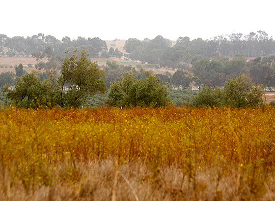 <p>Highway 101 is barely visible from proposed home sites in Santa Barbara Ranch&#8217;s foothills.</p>