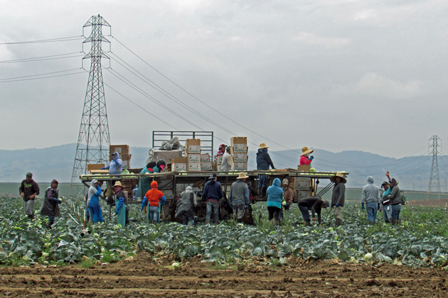 Field workers pick vegetables Monday west of Black Road in the Santa Maria Valley.