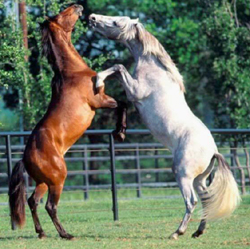 Real-life fitness can be defined by the ability to function and continue doing the activities you love, such as tending a horse ranch