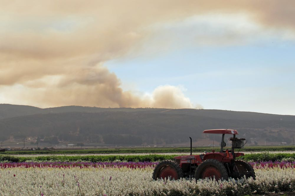Smoke from the Canyon Fire rises in the distance from a Lompoc flower field.