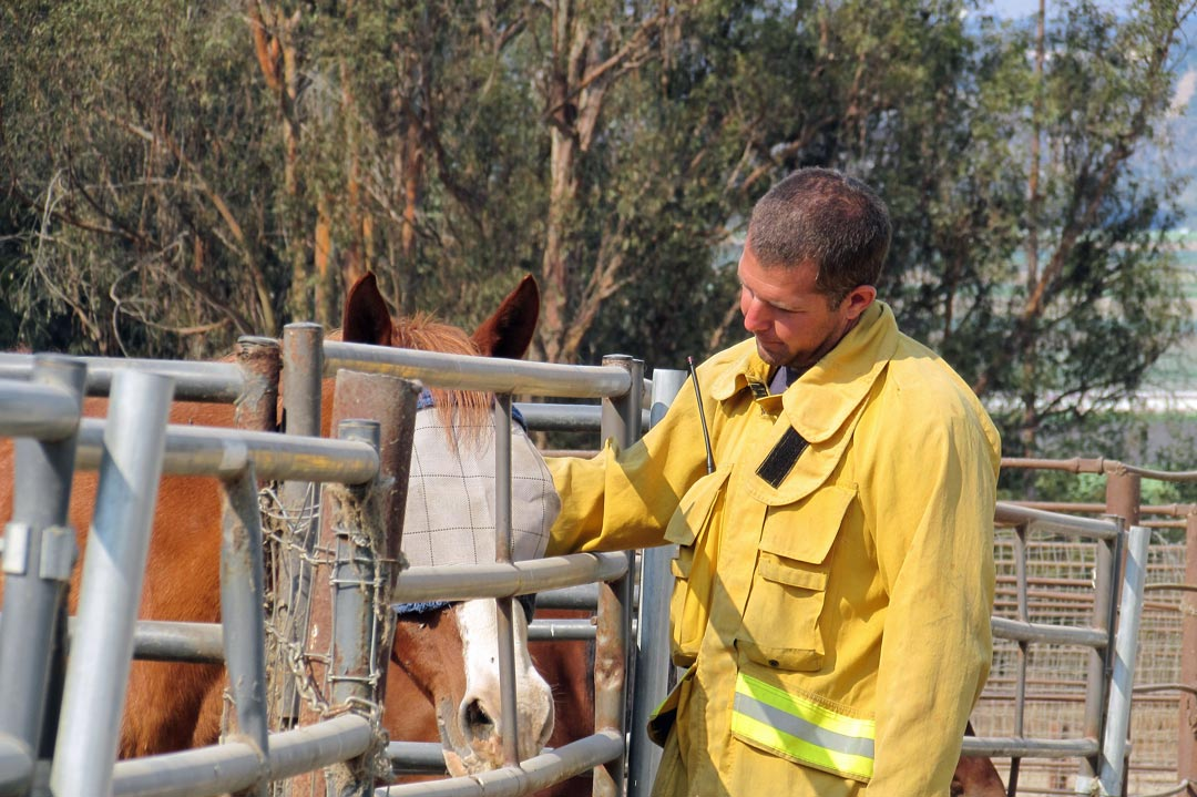 Oxnard Fire Department's Chad Carroll stops to visit the horses at La Salle Stable near the Canyon Fire burning at Vandenberg Air Force Base.