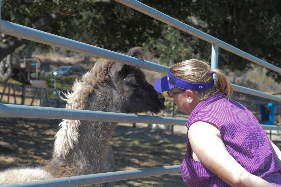 Ranch co-owner Mette Goehring greets a llama Monday at Ranch of the Oaks in Lompoc.