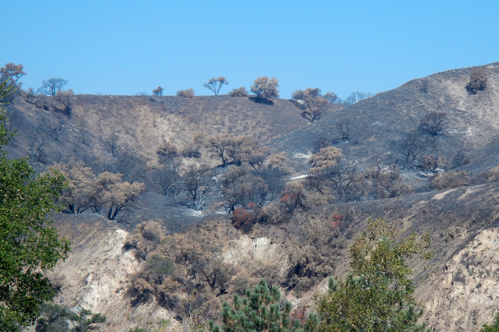 The recent Rey Fire burned more than 33,000 acres over San Marcos Pass.