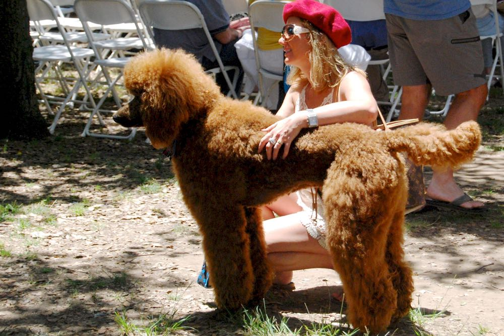 Kasia Selwa and her standard poodle Romeo attended the 28th annual Santa Barbara French Festival on Saturday. The event featured a Poodles & Pals Parade.