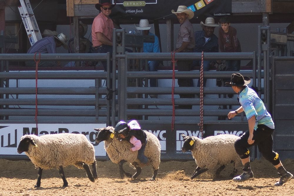 Mutton bustin' is a crowd favorite, and even captures the attention of older cowboys who are chasing bigger prizes.