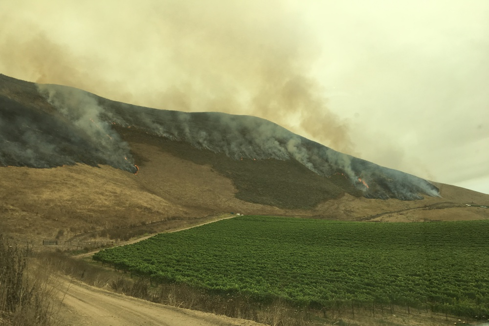 Flames from the Alamo Fire creep toward Bien Nacido Vineyards along Tepusquet Road east of Santa Maria on July 9.
