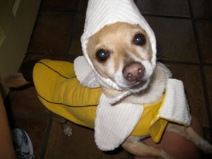 Poncho loves to play dress-up.