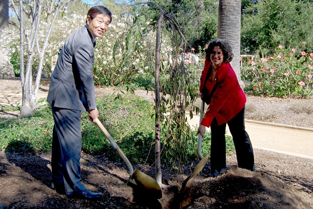 Toba's Mayor Kusuichi Kida and Mayor Helene Schneider turned a ceremonial shovelful of dirt and planted Japanese cherry blossom trees in the Alice Keck Park Memorial Gardens Wednesday.