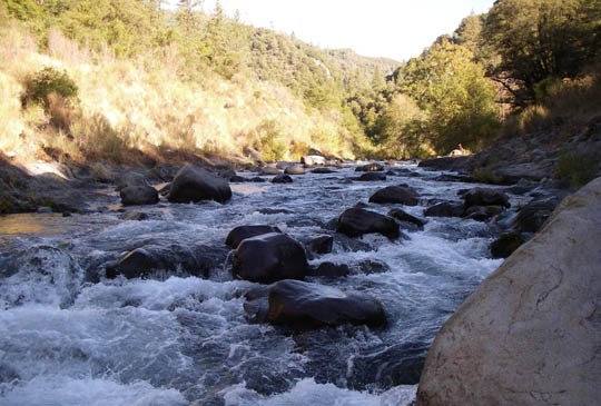 All vegetation on public waterways, such as Butte Creek in Butte County, is the property of the landowners, and removal of any blockage is their responsibility.