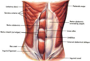 It helps to know ab anatomy to maximize workouts.