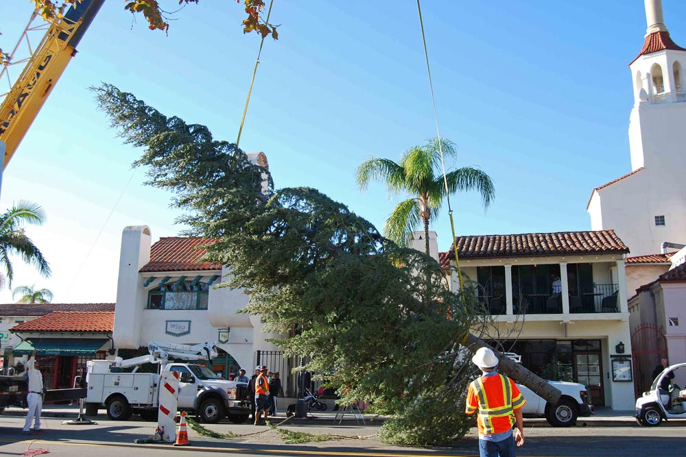 A 45-foot Douglas fir arrived in downtown Santa Barbara Tuesday morning and was installed in the middle of State Street just north of the Victoria Street intersection.